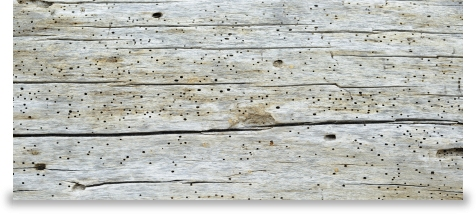Cedarcare  Specialists in the Treatment of Woodworm